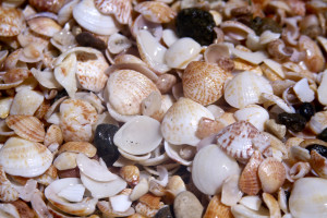 Shell Beach is named for its abundance of brightly colored seashells.