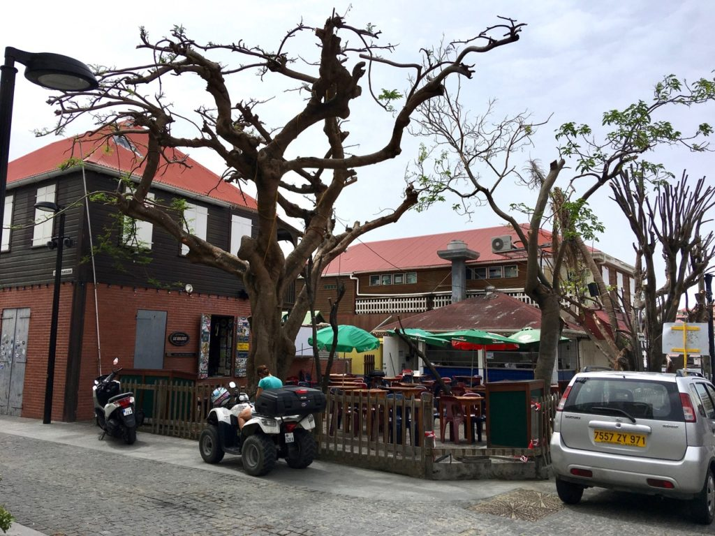 Le Select in Gustavia reopens. Trees start to regain their foliage