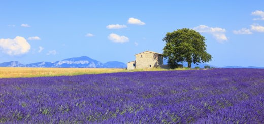 what-to-see-in-provence