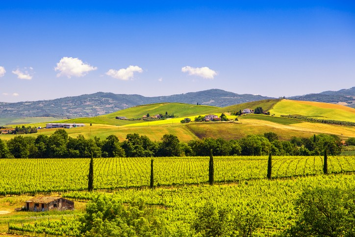 Montalcino countryside, vineyard, cypress trees and green fields. Tuscany, Italy Europe. Villas in Italy